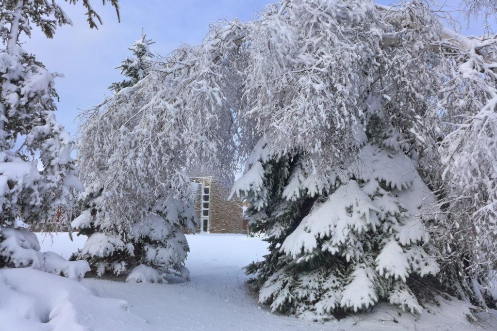 snowy branch in a snowy scene